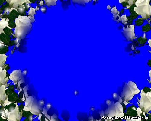 Футаж рамка на хромакее белые розы с